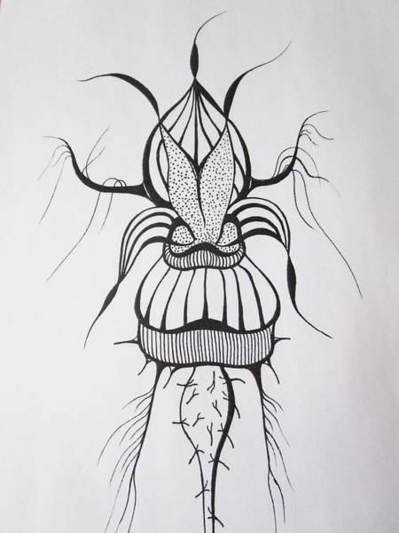 Drawing - Spiky Beauty by Rosita Larsson