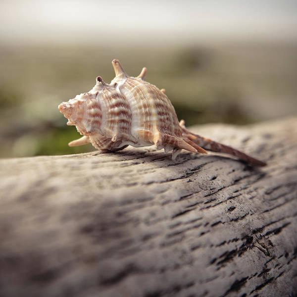 Wall Art - Photograph - Spiky Seashell by Lucid Mood