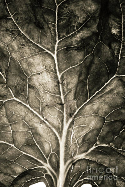 Wall Art - Photograph - Spinach Leaf by Bernard Jaubert