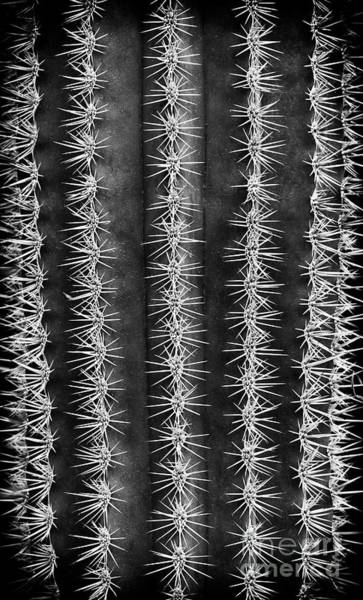 Wall Art - Photograph - Spines by Tim Gainey