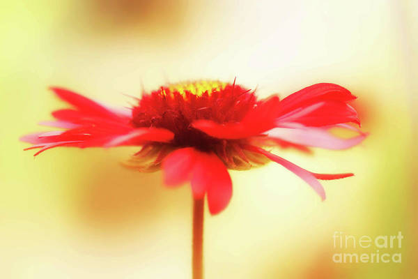 Photograph - Spinning Firewheel by Natural Abstract Photography