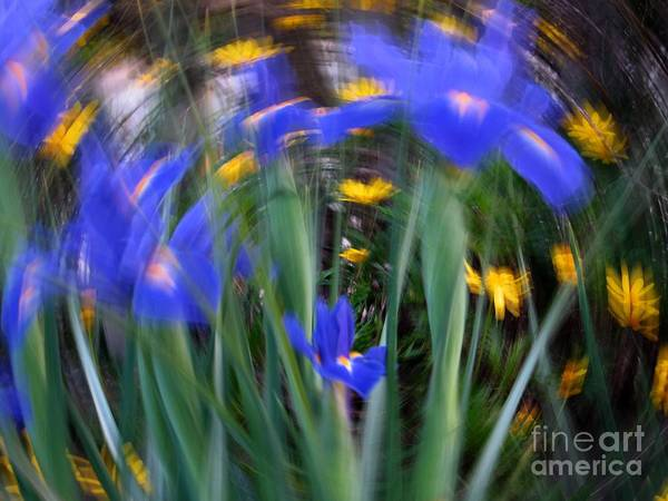 Photograph - Spinning Iris by James B Toy