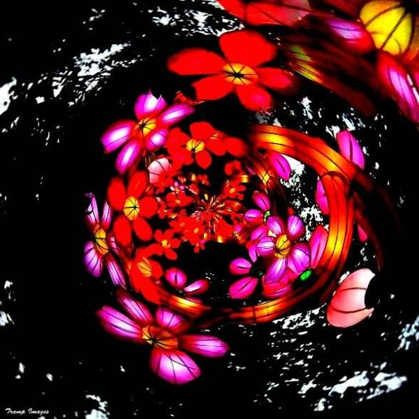 Photograph - Spinning With Flowers by Wesley Nesbitt