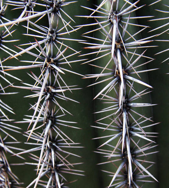 Photograph - Spiny Cactus by Lon Dittrick