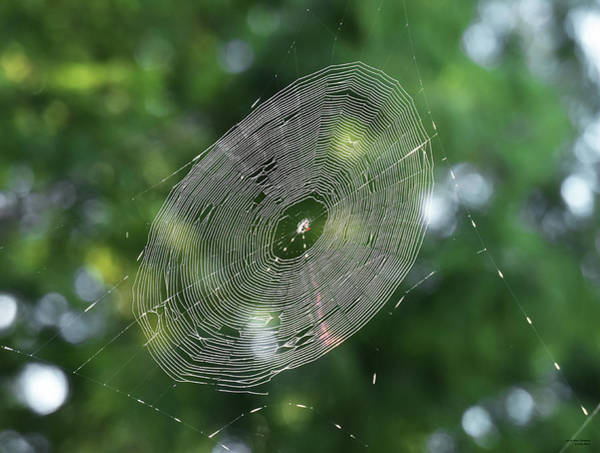 Photograph - Spiny Orb Weaver's Web by Sally Sperry