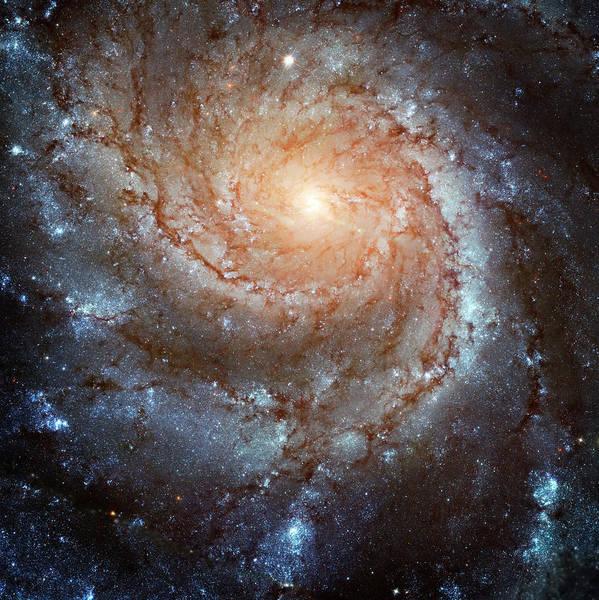 Wall Art - Photograph - Spiral Galaxy M101 by Ricky Barnard