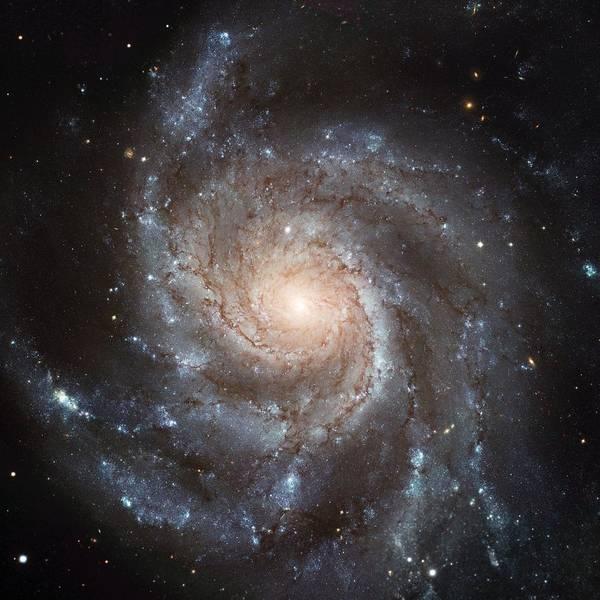 Photograph - Spiral Galaxy - Messier 77 by Marianna Mills