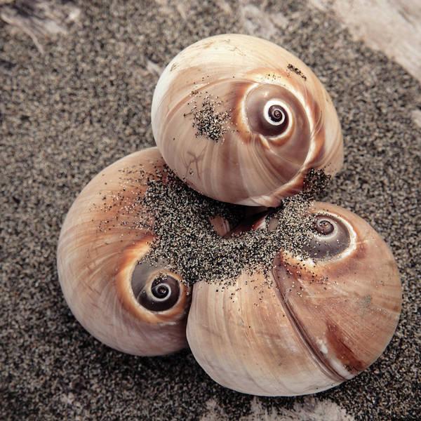 Wall Art - Photograph - Spiral Seashells by Lucid Mood