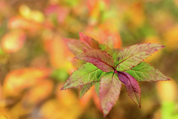 Photograph - Spireally Like The Fall by Keith Smith