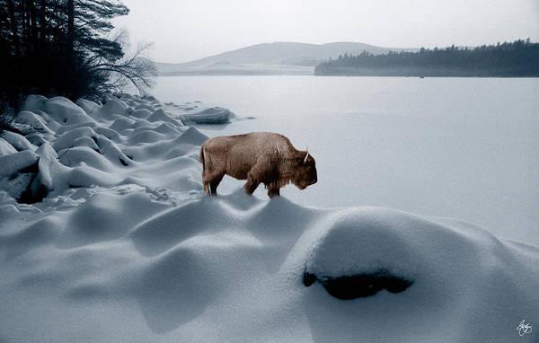Photograph - Spirit Buffalo Before A Frozen Lake by Wayne King