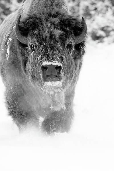 Wall Art - Photograph - Spirit Buffalo by Sandy Sisti