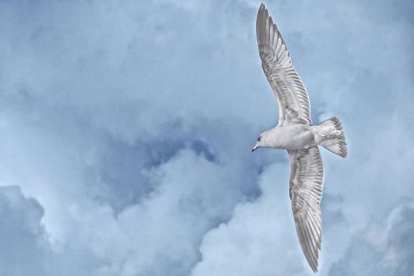 Photograph - Spirit In The Sky by Flying Z Photography by Zayne Diamond