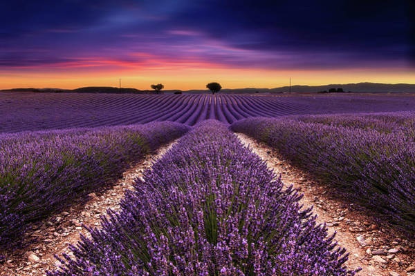 Photograph - Spirit Of Ecstasy by Jorge Maia