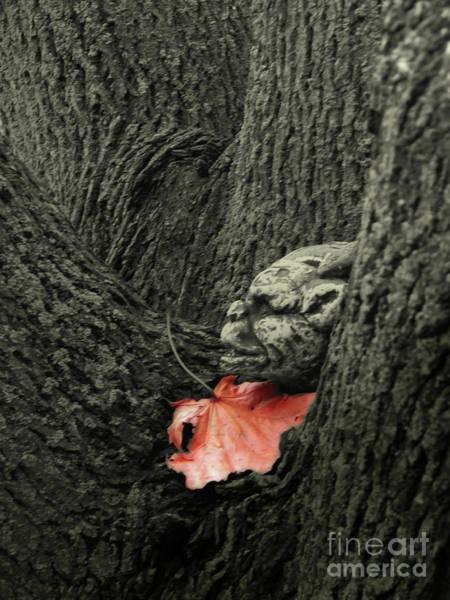 Gargoyle Digital Art - Spirit Of The Maple Tree by V Rachel Lucas