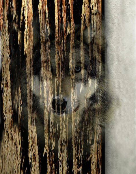 Timber Wolves Digital Art - Spirit Of The Wolf by Athol Fahey