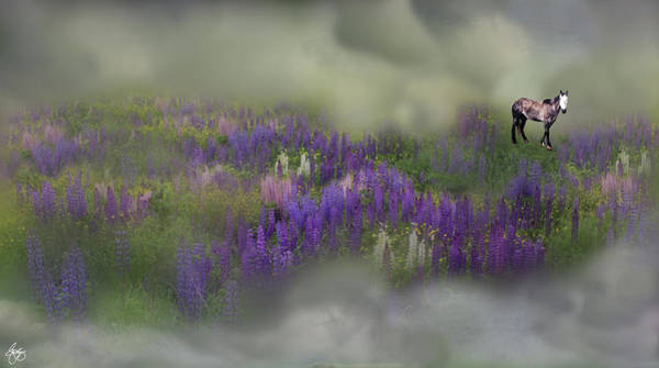 Photograph - Spirit Pony In A Lupine Cloud by Wayne King