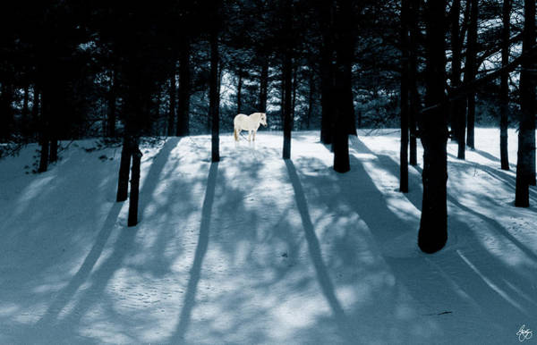 Photograph - Spirit Pony In A Shadowed Wood by Wayne King