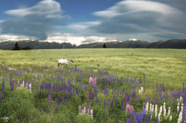Spirit Pony In High Country Lupine Field Art Print