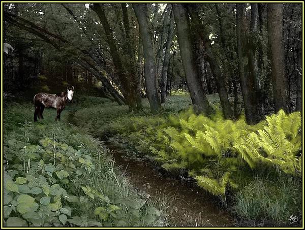 Photograph - Spirit Pony On Langdon Wood Fernpath by Wayne King