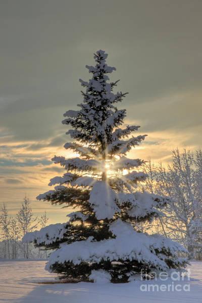 Photograph - Spirit Tree by Brad Allen Fine Art