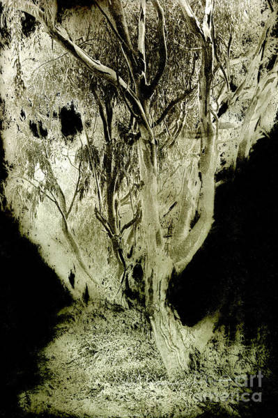 Solarized Photograph - Spirit Tree by Paul W Faust -  Impressions of Light