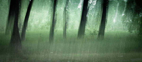 Photograph - Spirits Of The Forest by John De Bord