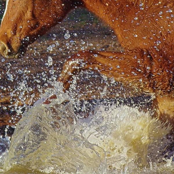 Photograph - Splash by Amanda Smith