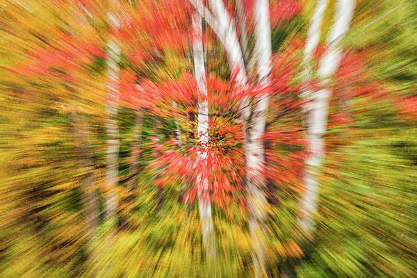 Photograph - Splash Of Autumn by Michael Blanchette