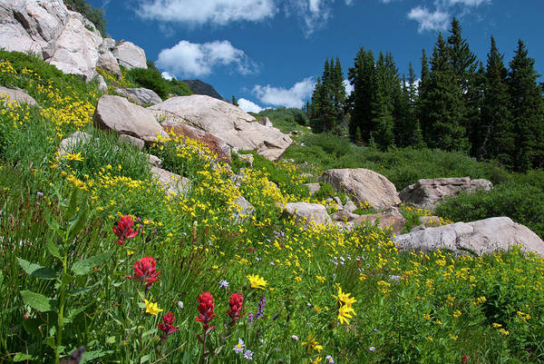 Photograph - Splash Of Red In A Colorado Wildflower Meadow by Cascade Colors