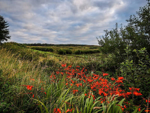 Photograph - Splash Of Summer Color In The County Clare Countryside by James Truett