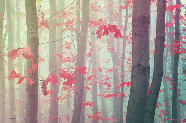 Photograph - Splashes Of Autumn Colors. Dreamy by Jenny Rainbow