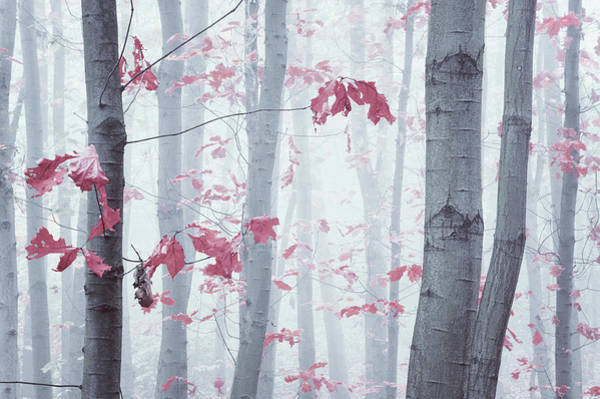 Photograph - Splashes Of Autumn Colors by Jenny Rainbow