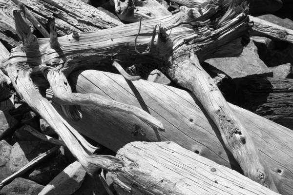 Photograph - Splayed Driftwood by Polly Castor