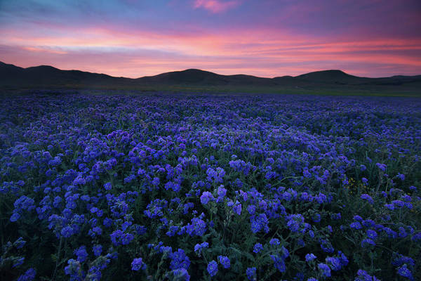 Wall Art - Photograph - Splendid Sunrise Over The Carrizo Plain by Bridget Calip