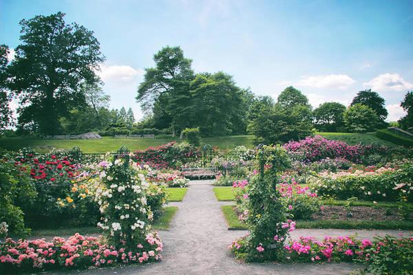 Photograph - Splendor Garden by Jessica Jenney