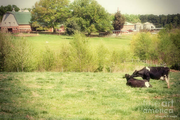 Nc State Wall Art - Photograph - Splendor In The Grass by Paulette B Wright
