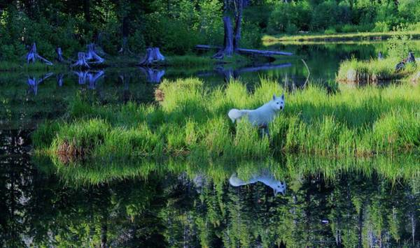 Photograph -  Splendor In The Grass  by Sean Sarsfield
