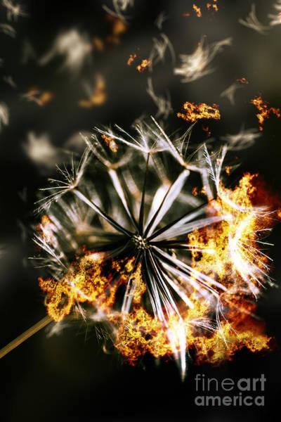 Flammable Photograph - Splinters Of Finality by Jorgo Photography - Wall Art Gallery