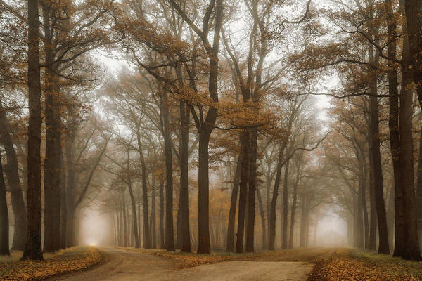 Wall Art - Photograph - Split by Martin Podt