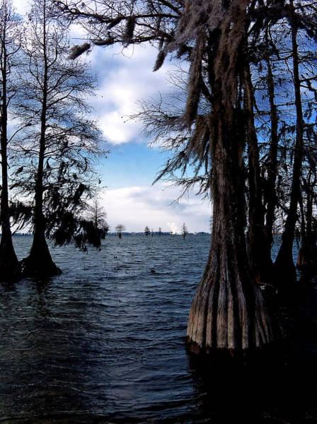 Photograph - Spooky Cypress Trees by Louis Dallara