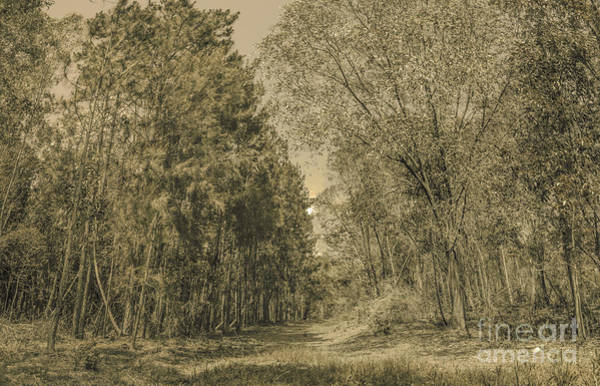 Wall Art - Photograph - Spooky Old Woods by Jorgo Photography - Wall Art Gallery