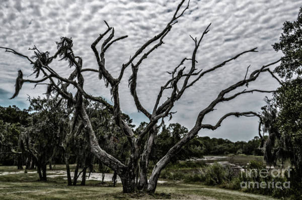 Photograph - Spooky Tree On Wadmalaw Island by Dale Powell