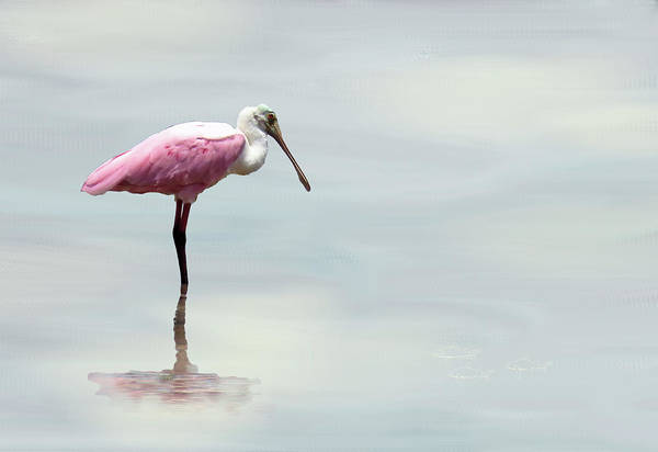 Mixed Media - Spoonbill In The Mist. by Rosalie Scanlon