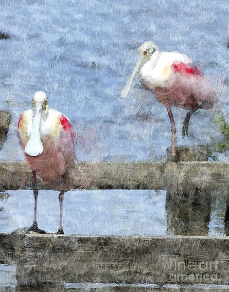 Marsh Bird Digital Art - Spoonbills Hanging Out by Betty LaRue