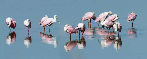 Photograph - Spoonbills Reflected by Dawn Currie