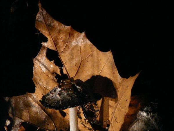 Shrooms Photograph - Spore Chomp by Wayde Gordon