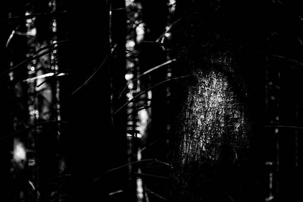 Dense Photograph - Spotlight In The Woods Black And White by Pelo Blanco Photo