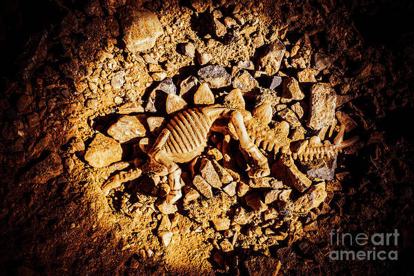 Bone Photograph - Spotlight On A Extinct Stegosaurus by Jorgo Photography - Wall Art Gallery