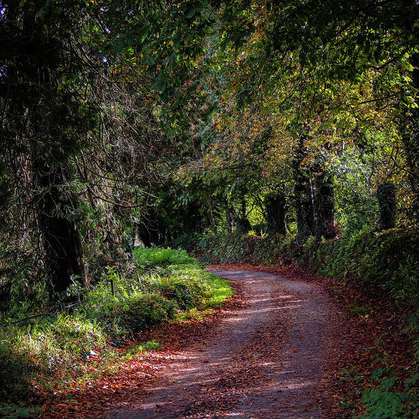 Photograph - Spots Of Light On Autumn Path by James Truett