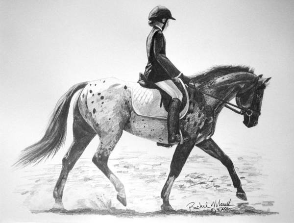 Appaloosa Drawing - Spotted Elegance by Rachel Hessinger